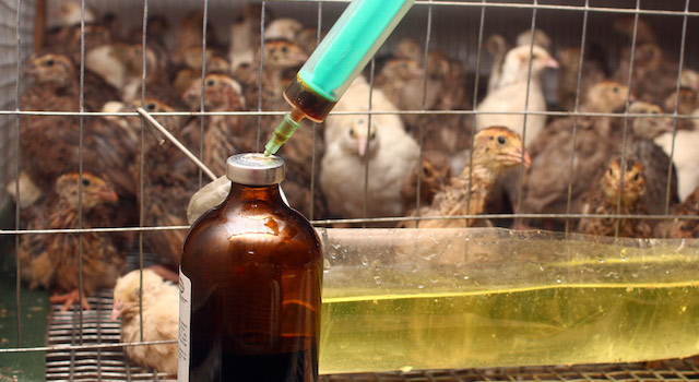 blog-antibiotics-animals