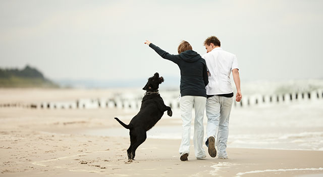 blog-dog-walk-beach