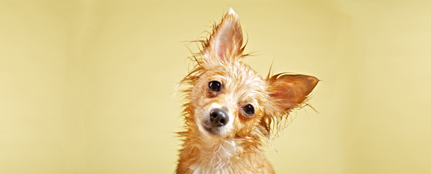 True or False? Leaving the house with wet hair can make you sick.