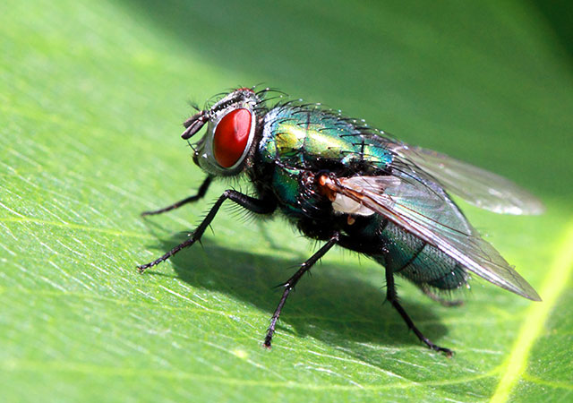 6 Types of Fly Bites You May Get this Summer (& What to Do